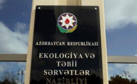 Goranboy rayon Meşə İdarəsində özbaşınalıq - ANONS!
